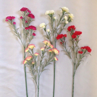 CARNATION MINI SINGLE STEM 4 COLOURS